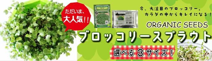 お家で育てよう!オーガニック種子 ブロッコリースプラウト種子