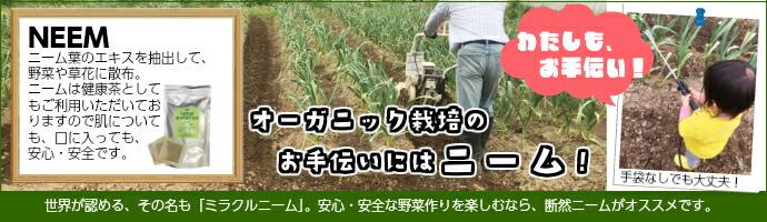 オーガニック・ガーデニング栽培 ニーム茶60包入り