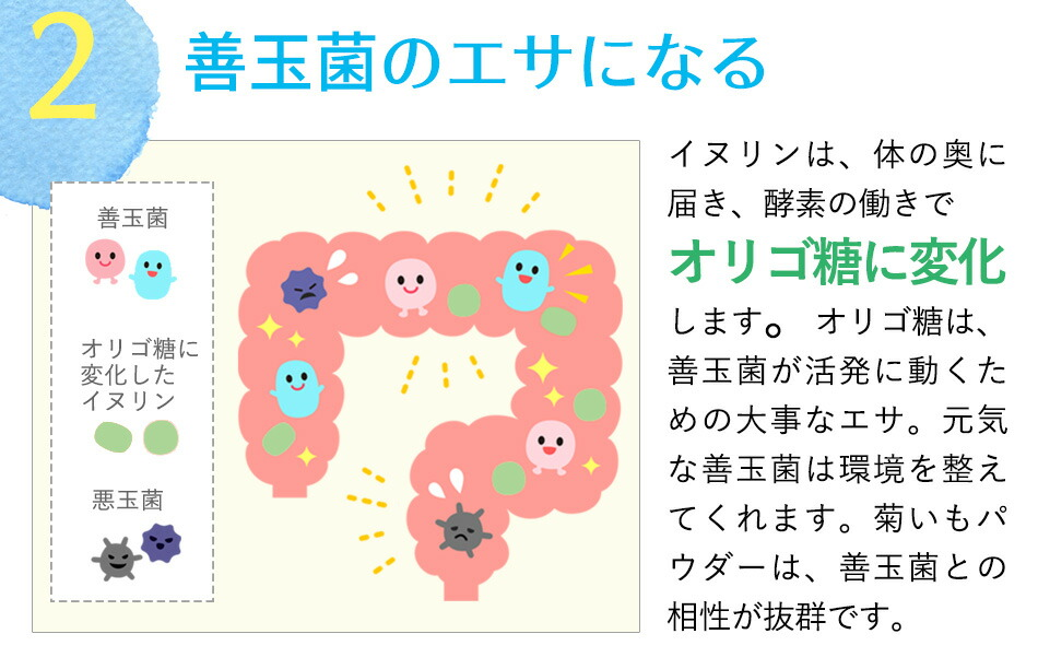 イヌリン効果 菊芋パウダー キクイモ粉末 中性脂肪 糖質対策