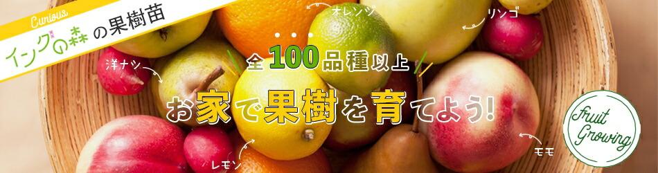果樹苗 果樹苗木 フルーツ