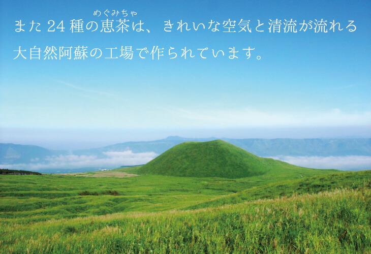 24種の恵茶は阿蘇の工場で作られています。