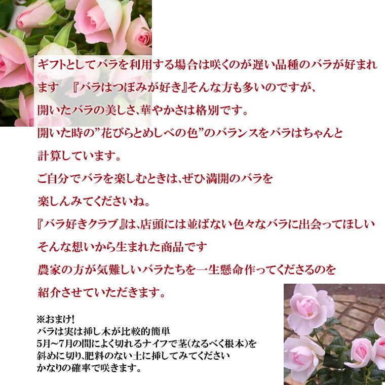 バラの定期発送