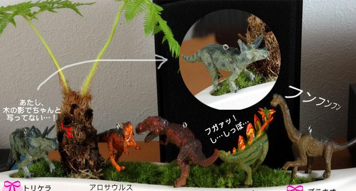 苔盆栽ギフト