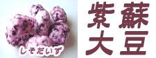 紫蘇大豆 しそ大豆 北海道