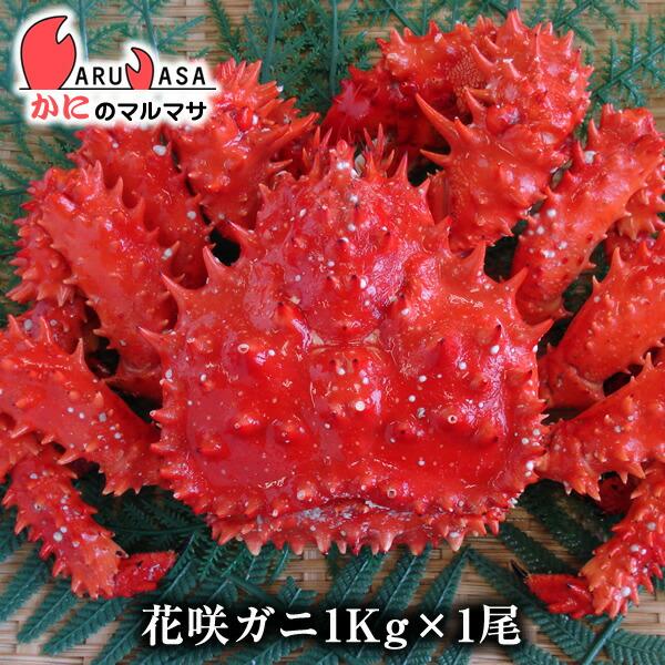 【かにのマルマサ】北海道直送活花咲ガニ(オス)1.0kg