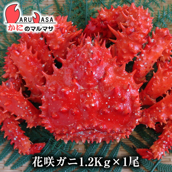 【かにのマルマサ】北海道直送活花咲ガニ(オス)1.2kg