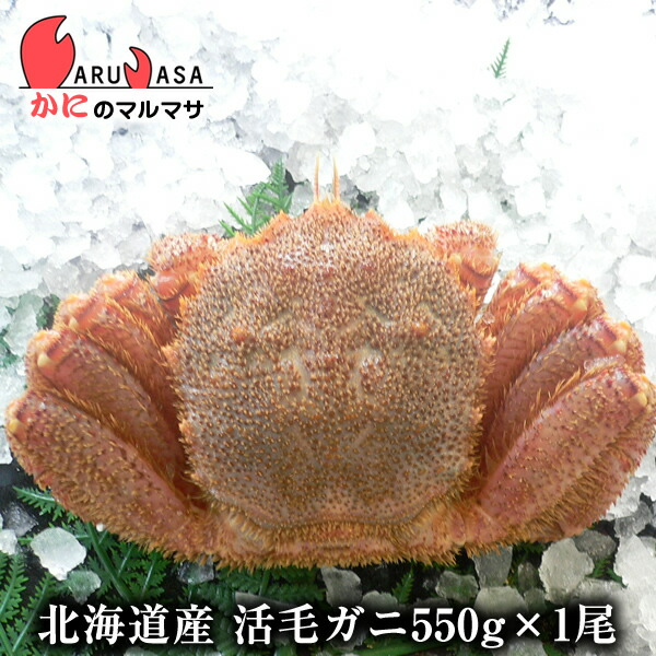 【タイムセール】北海道産 活毛ガニ 550g 1尾 旬なカニを北海道直送