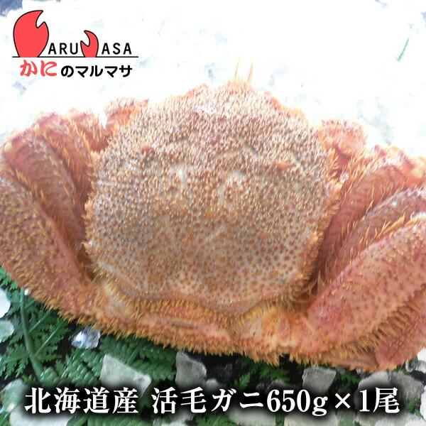 北海道産活毛ガニ650g前後期間限定価格!身入りばっちり!蟹みそがたっぷりつまった毛がに北海道産極上毛蟹!