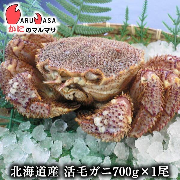 【かにのマルマサ】新鮮毛ガニ700g前後期間限定価格!身入りばっちり!蟹みそがたっぷりつまった北海道直送極上毛蟹!