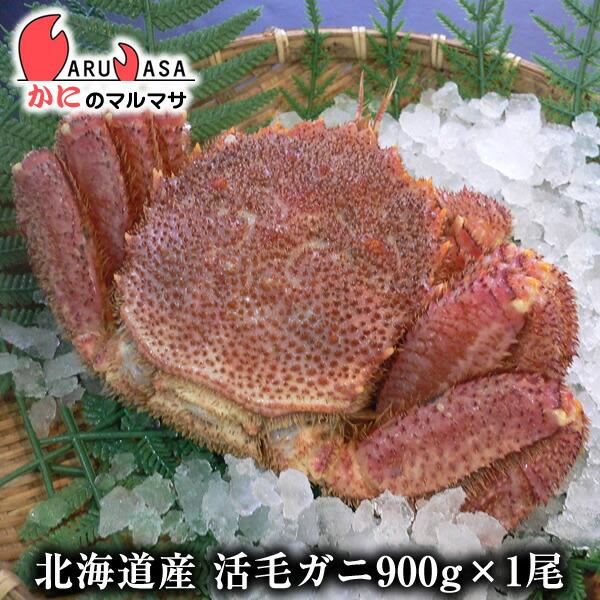 【かにのマルマサ】新鮮活毛ガニ900g前後期間限定価格!身入りばっちり!蟹みそがたっぷりつまった毛がに北海道産極上毛蟹!