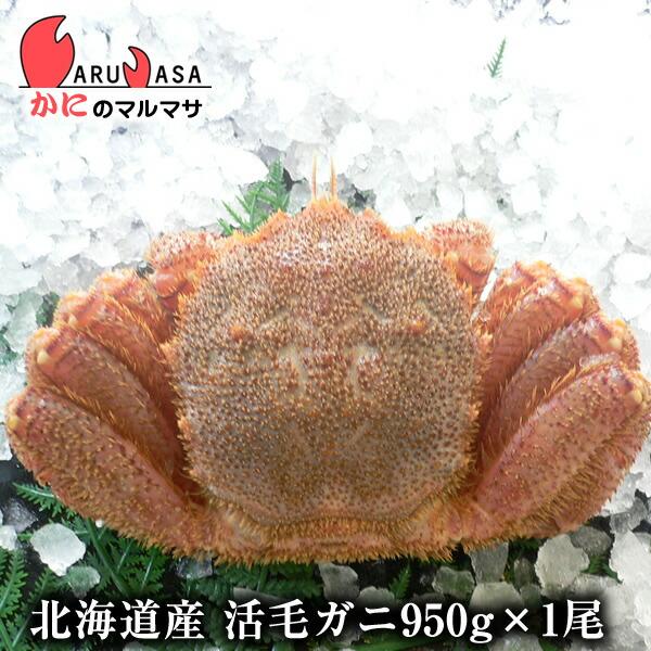 【かにのマルマサ】新鮮活毛ガニ950g前後期間限定価格!身入りばっちり!蟹みそがたっぷりつまった毛がに北海道産極上毛蟹!