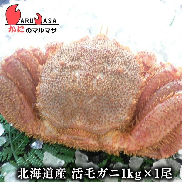 【かにのマルマサ】新鮮活毛ガニ1.0kg前後期間限定価格!身入りばっちり!蟹みそがたっぷりつまった毛がに北海道産極上毛蟹!