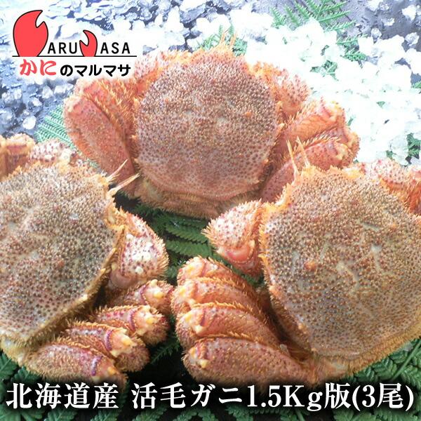 北海道産活毛ガニ1.5kg詰合せ(3尾入り)身入りばっちり!蟹みそがたっぷりつまった毛がに北海道産極上毛蟹!