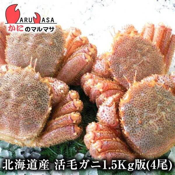 北海道産活毛ガニ1.5kg詰合せ(4尾入り)身入りばっちり!蟹みそがたっぷりつまった毛がに北海道産極上毛蟹!