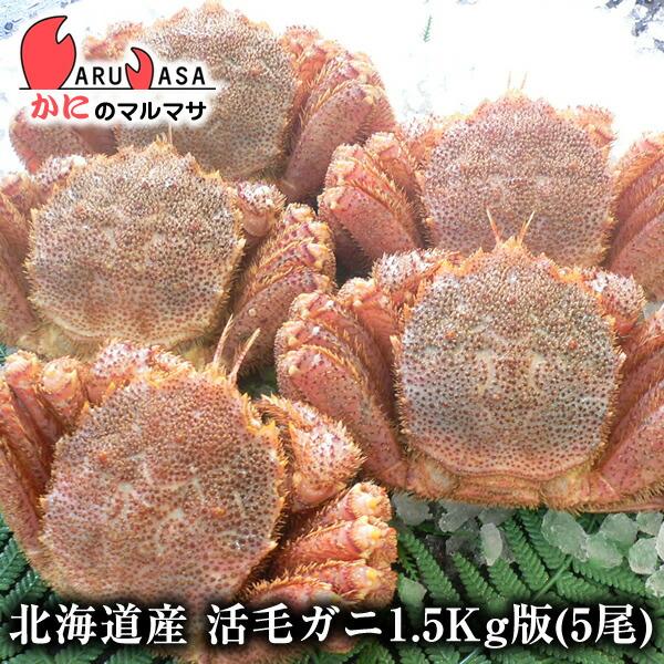 北海道産活毛ガニ1.5kg詰合せ(5尾入り)身入りばっちり!蟹みそがたっぷりつまった毛がに北海道産極上毛蟹!