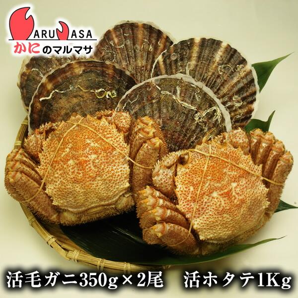 【かにのマルマサ】北海道海の幸福袋ギフトに大人気!活毛ガニ350g×2尾と活ホタテ1.0kgセット