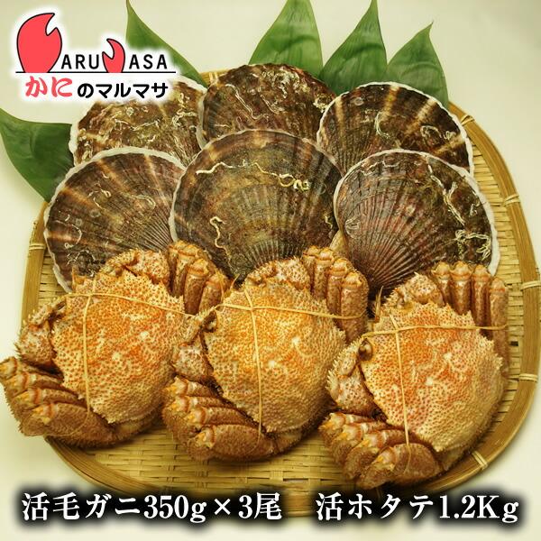 【かにのマルマサ】北海道海の幸福袋ギフトに大人気!活毛ガニ350g×3尾と活ホタテ1.2kgセット