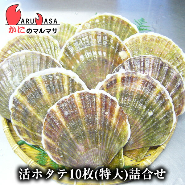 北海道産 冷蔵 活ホタテ貝(特大)10枚詰め合わせ