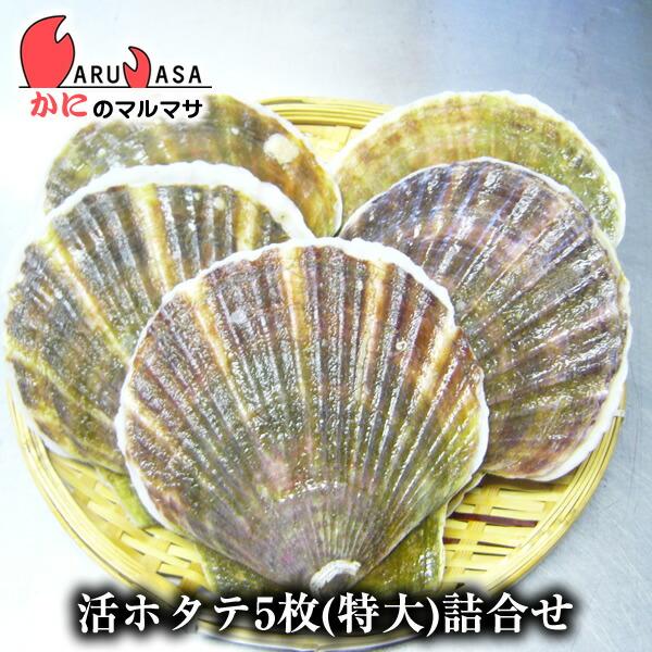 北海道産 冷蔵 活ホタテ貝(特大)5枚詰め合わせ