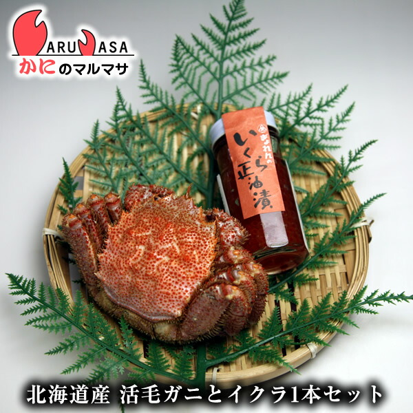 北海道産 活毛がに350g×1尾&いくら醤油×1本セット
