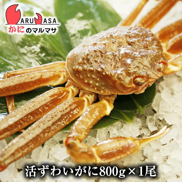 【かにのマルマサ】北海道直送ずわい蟹800g