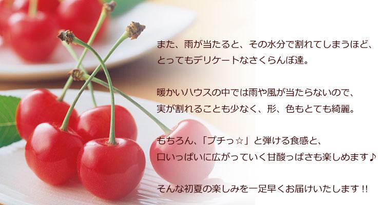 ハウス佐藤錦2