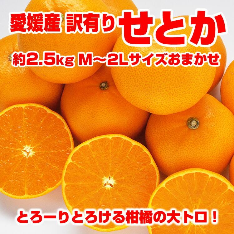 【送料無料】【訳あり】愛媛県産 せとか 2.5kg サイズおまかせ(M-2L混合)