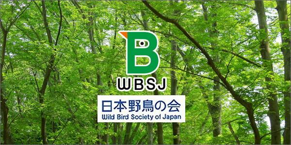 日本野鳥の会 森