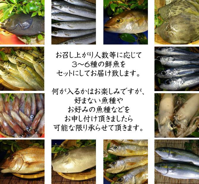 楽天ランキング常連!かなりお得な大人気の魚セットです!