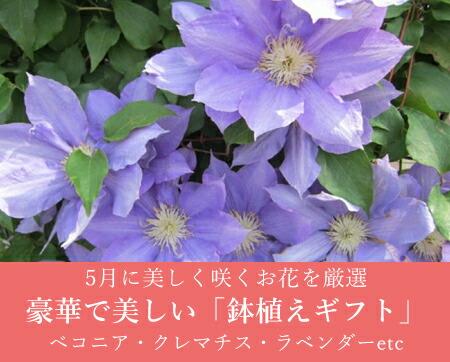 母の日におすすめ!花鉢ギフト