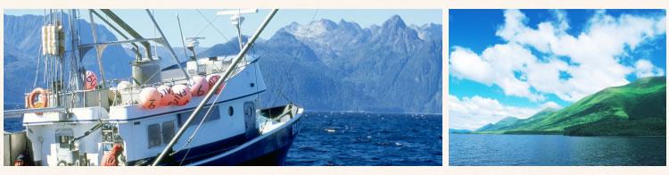 紅鮭漁の様子