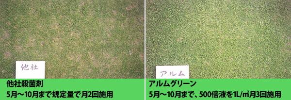芝生の病気比較