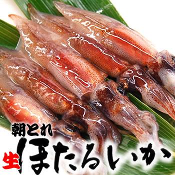 朝とれ生ホタルイカ(冷蔵)1kg