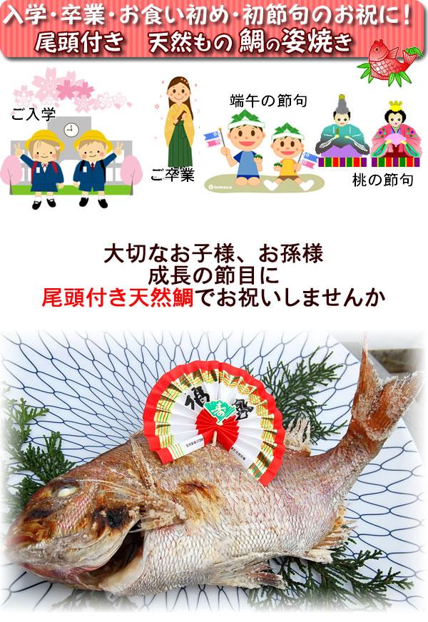 お祝い事に!国産の添加物未使用!安心安全の焼き鯛を!