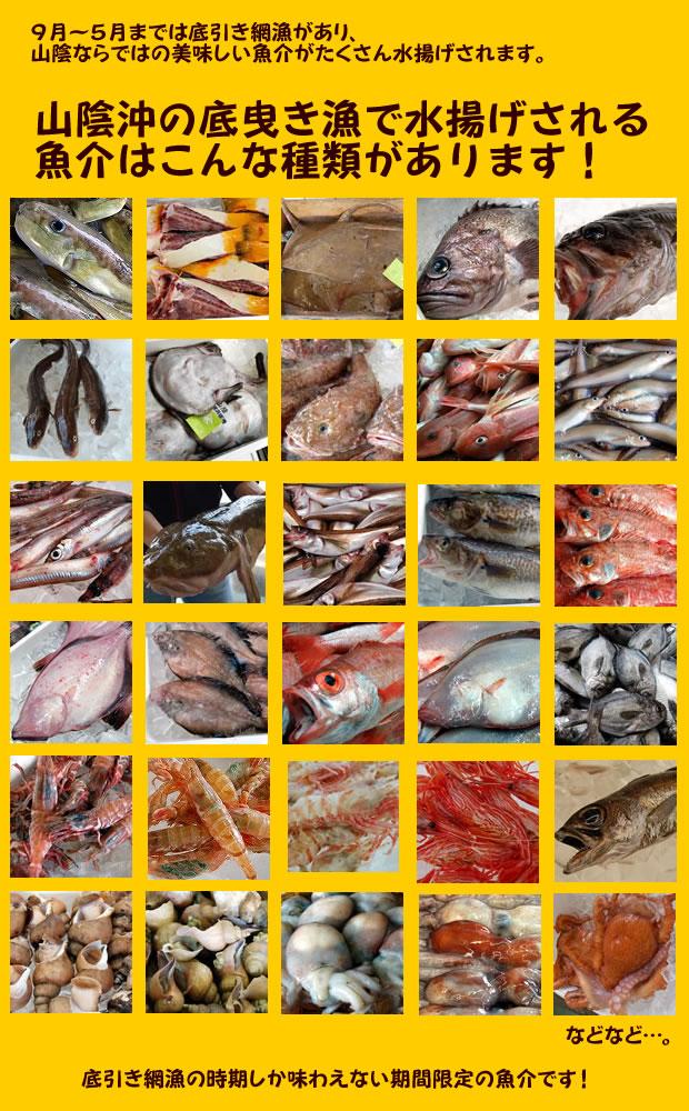 底引き網漁でとれる魚介