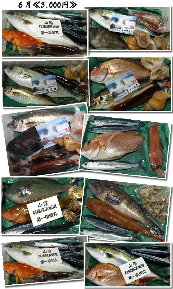 6月の山陰浜坂港直送!朝とれお魚セット一例になります。