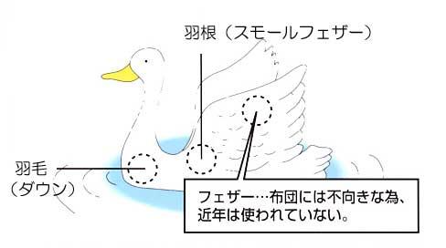 羽毛と羽根の違い
