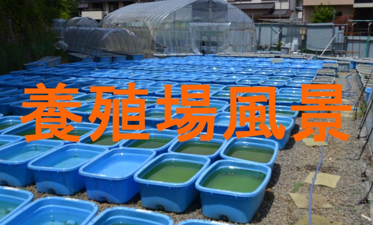 養殖場風景