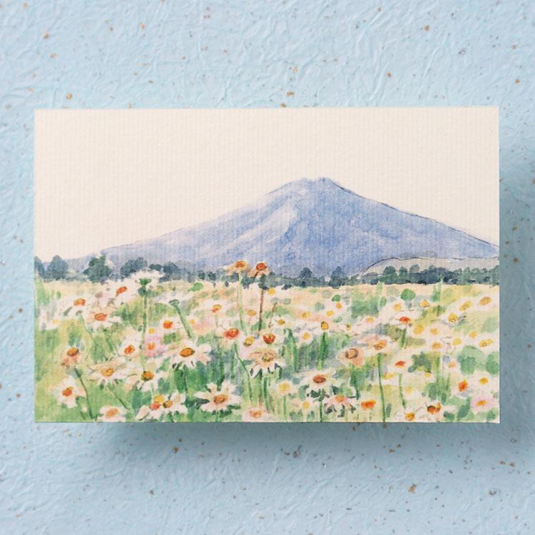 季節のはがき富士とマーガレット