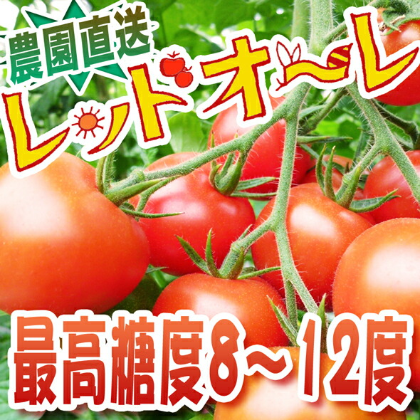 中玉トマトの女王様レッドオーレ