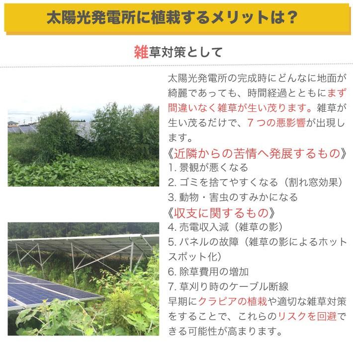 太陽光発電所にクラピアを植えるメリットとは?