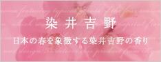 染井吉野 日本の春を象徴する染井吉野の香り