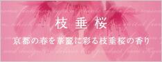 枝垂桜 京都の春を華麗に彩る枝垂桜の香り