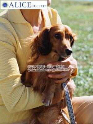 シナプス ドクターママルシリーズ ルンワン ジョイワン 輝龍 ルンブレン ペット用 動物用