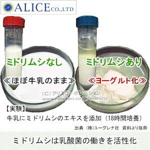ユーグレナと乳酸菌