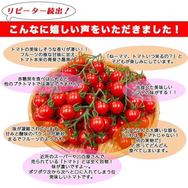 甘い 高糖度  ミニトマト フルーツトマト 赤糖房