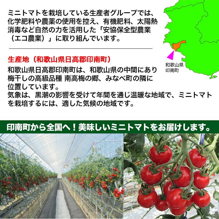 送料無料ミニトマト 和歌山産 優糖星・ユウトウセイ・ゆうとうせい