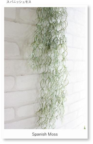 楽天市場 スパニッシュモス チランドシア 40995 造花 フェイクグリーン