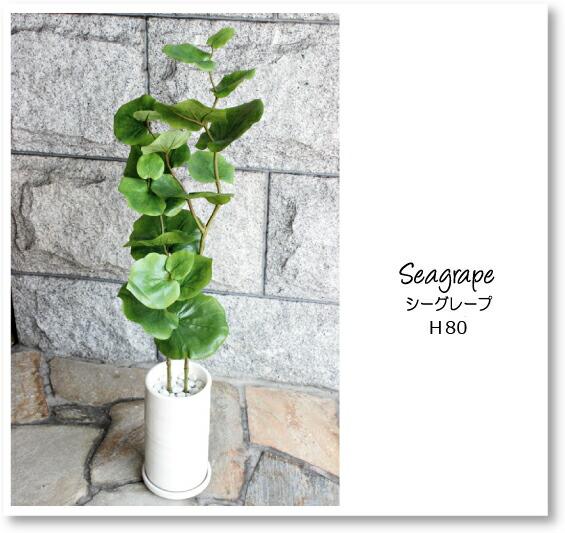 seagrape850401.jpg