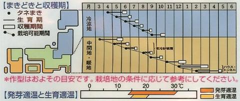 ミニダイコン種 フレンチ・ブレックファスト(13ml)